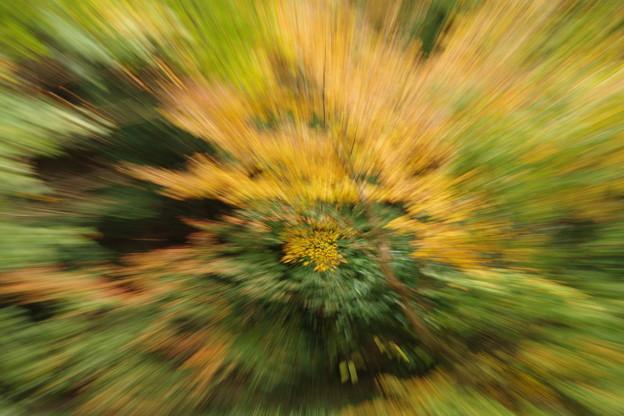 秋のグルグル