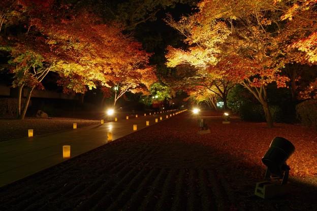 写真: 秋の夜