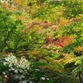 写真: 秋のシンフォニー