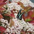 写真: 花と蝶々