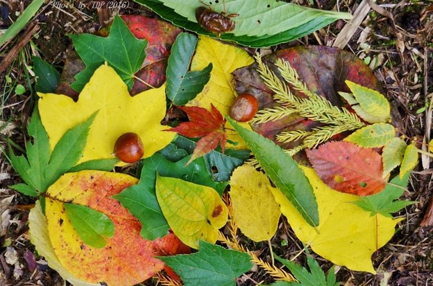 初秋を拾い集める