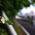 写真: 道端に咲く一輪の花