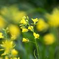 写真: 春の匂い