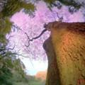 江戸彼岸桜.......