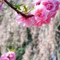 Photos: 共演.......