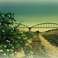 野茨と水道の橋.......