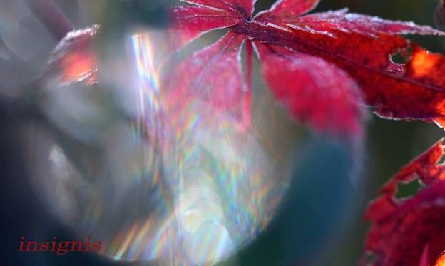 写真: 虹重ね.......