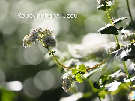 U9170073