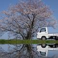 桜と軽トラ