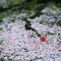 Photos: 花絨毯