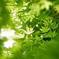 写真: 緑の小窓