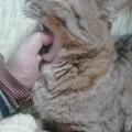 写真: ひい~ッ、指くわえたままでのあくび!