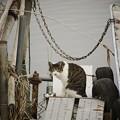 舟留まり猫