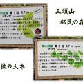 Photos: 栃と桂