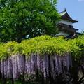 高島城の藤棚