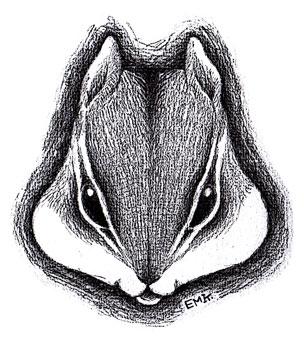 リスの顔(白黒)