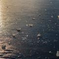 Photos: ICE