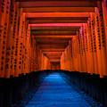 Photos: 千本鳥居