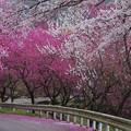 こぼれる春