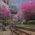 Photos: わたらせ渓谷鐵道