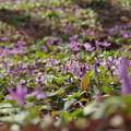 花絨毯の彩り
