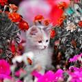 Photos: Floral magic in spring(10021)