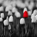 Photos: Floral magic in spring(10023)
