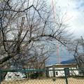 写真: 日本放送協会ラジオ中継局のところのさくら
