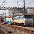 写真: EF66貨物 東海道本線戸塚駅