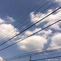 写真: 夏空のしたGO ~summer sky
