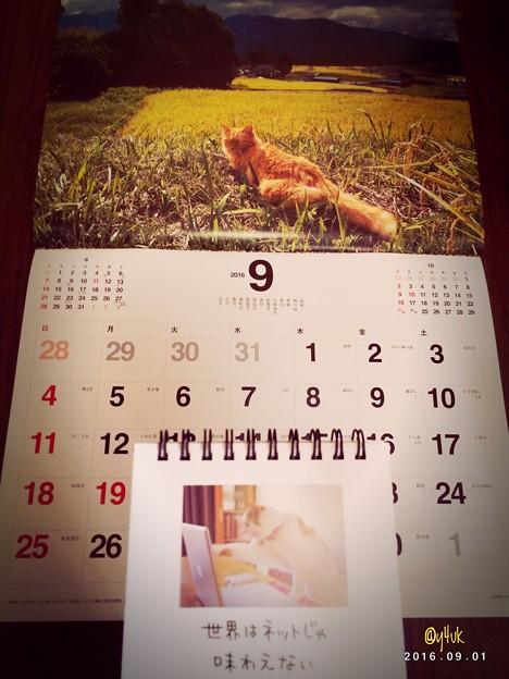 Photos: もぅ9月長月 ~世界はネットじゃ味わえない