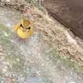 写真: ポケモンがいて奥に鳥もいて~real life joy