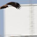 写真: 無音の翼