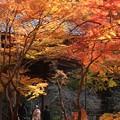Photos: 鎌倉の紅葉