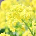 写真: 一足早く春を