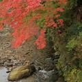 Photos: 和流と紅葉