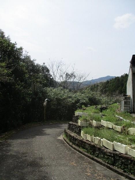 Photos: shingai03