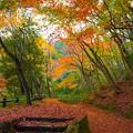 Photos: 落葉の絨毯