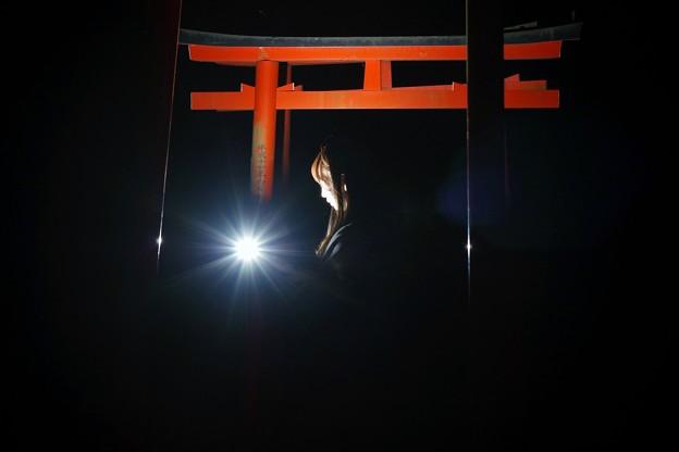 Photos: ヒカリ