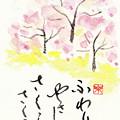 写真: 桜 by ふうさん