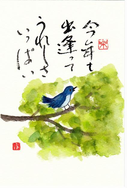 写真: 青い鳥 by ふうさん