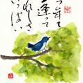 Photos: 青い鳥 by ふうさん