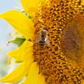 Photos: Summer Bee