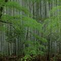 竹の寺にて