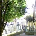 写真: 本照寺-04墓地b