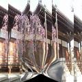 写真: 日夜山正徳寺-03本堂b(4)