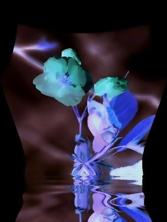 朱雀の花-01e