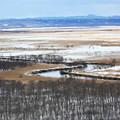 写真: 釧路湿原