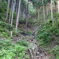 写真: 鋸山林道にて