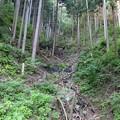 Photos: 鋸山林道にて